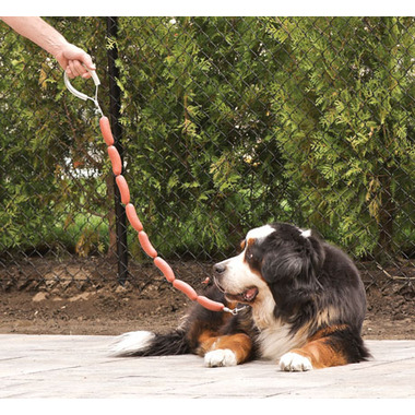 hot-dog-leash