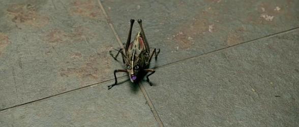 rapture_palooza_locust_suffer